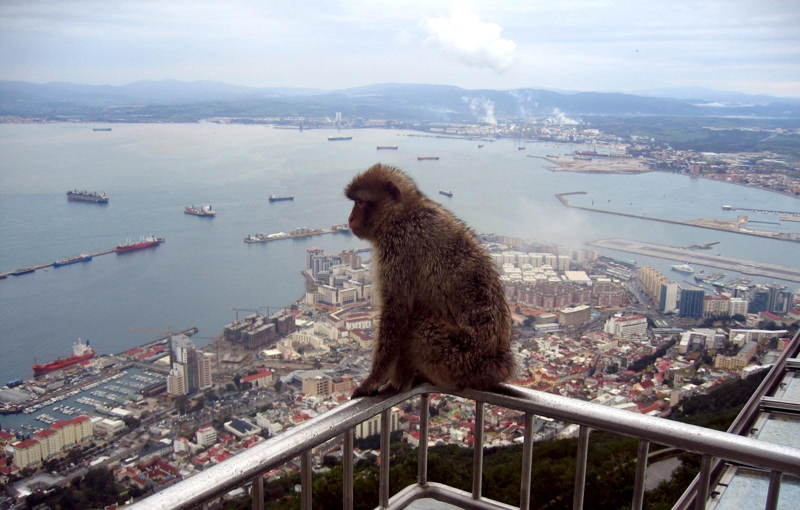 Tours Of Gibraltar